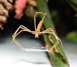 modul de prevenire a venelor păianjen cu vitamine
