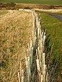 New Hedge - geograph.org.uk - 693712.jpg