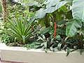 New York Botanical Garden 37.jpg