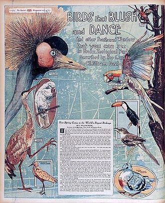 William Beebe - April 1906 cover story of New York Worlds Sunday magazine written by William Beebe, advertising the Bronx Zoo's diversity of birds