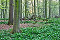Nordkirchen, Naturschutzgebiet Ichterloh -- 2018 -- 2060-2.jpg