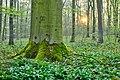 Nordkirchen, Naturschutzgebiet Ichterloh -- 2018 -- 2078-7.jpg