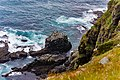 Northern Gannets St Mary Cape Newfoundland (26493217877).jpg