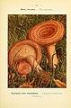 Nouvel atlas de poche des champignons comestibles et vénéneux (Pl. 27) (6459634727).jpg