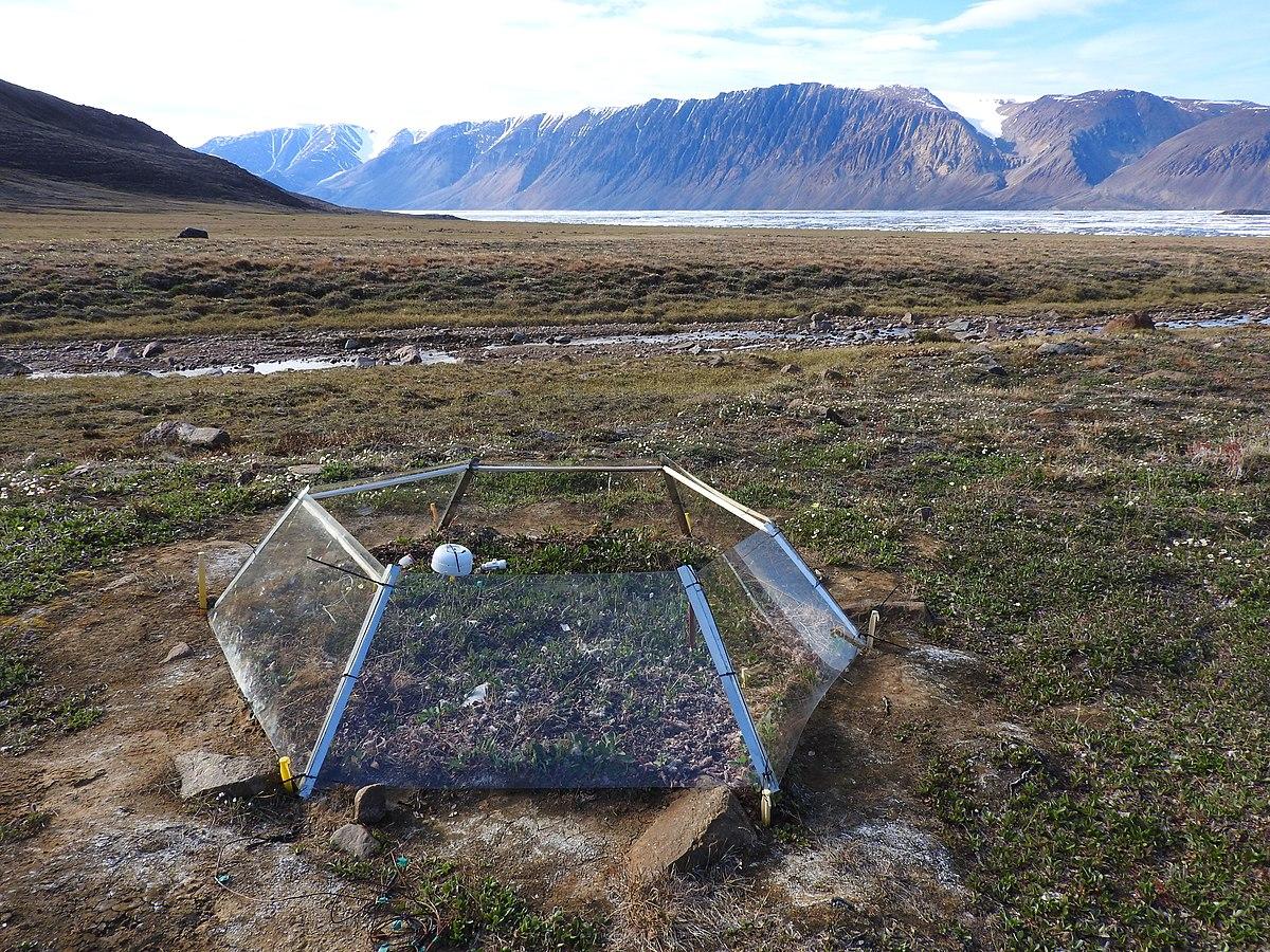 International Tundra Experiment - Wikipedia