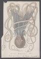 Octopus granulatus - - Print - Iconographia Zoologica - Special Collections University of Amsterdam - UBAINV0274 090 03 0005.tif