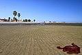 Odlivem vyplavené medúzy, Walvis Bay - panoramio.jpg