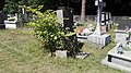 Old catholic cemetery in Pionki, 2019.07.25 (16).jpg