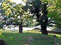 Old oaks - geograph.org.uk - 484207.jpg