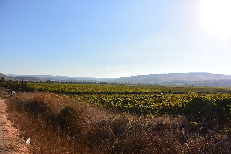 File:Orchard at Naftali Mountains.JPG