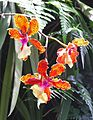 Orchids-NationalOrchidGarden-20041025.jpg
