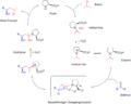Organokatalyse Prolinmechanismus.png