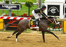 A dark brown race horse and jockey crossing the finish line at Pimlico racetrack