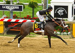 Oxbow (horse) - Image: Oxbow finish line 2013 Preakness Stakes crop