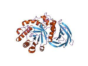 Glycoside hydrolase family 30 - Image: PDB 1nof EBI