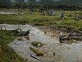 PN Tierra del Fuego 05.jpg