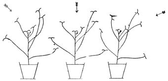 PSM V47 D239 Separate light paths on plant leaves.jpg