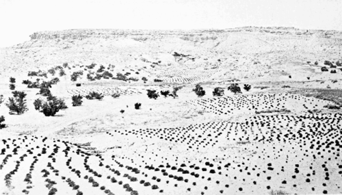 PSM V55 D770 Desert planting and agriculture near oraibi.png