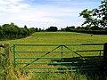 Paddock near Upper Basildon - geograph.org.uk - 20624.jpg