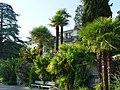 Palmiers à Montreux.jpg