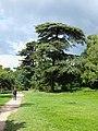 Paris-FR-75-Bois de Boulogne-28 mai 2019-arbres-2.jpg