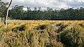 Parque Nacional Lago St Clair-Tasmania-Australia03.JPG