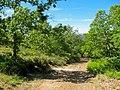 Parque Natural de Montesinho Porto Furado trail (5733152026).jpg