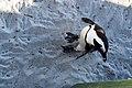 Penguins at Boulders Beach, Cape Town (12).jpg