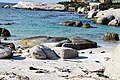 Penguins at Boulders Beach, Cape Town (7).jpg