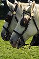 Percherons attelés mondial du cheval percheron 2011Cl J Weber07 (23975328372).jpg