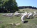 Perchtoldsdorfer Heide, Bild 30.jpg