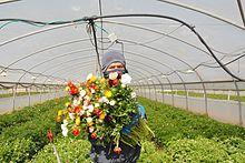 Vườn hoa ở Ísrael
