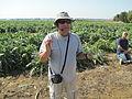 PikiWiki Israel 34555 Artichoke farm in Nir Banim.JPG
