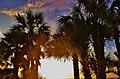 Pine Island Hernando Beach Florida United States - panoramio (13).jpg