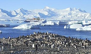 Pingüinos, Cuverville 1.jpg