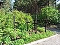 Pirčiupiai 65446, Lithuania - panoramio (5).jpg