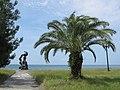 Pitsunda, Abkhazia, Пляж, Пицунда, Абхазия.jpg