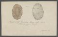 Planaria gigas - - Print - Iconographia Zoologica - Special Collections University of Amsterdam - UBAINV0274 105 09 0002.tif