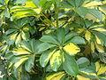 Plantita.JPG