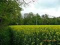 Pole rzepakowe przy parku - panoramio.jpg