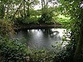 Pond at the Edge of the Wood - geograph.org.uk - 64162.jpg