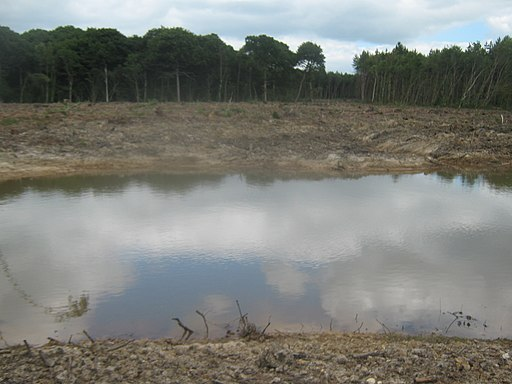 Pond in Belce Wood - geograph.org.uk - 1958576