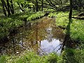 Pool alongside the Tamar - geograph.org.uk - 794095.jpg