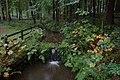 Portglenone forest (2) - geograph.org.uk - 263052.jpg