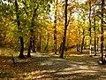Praha, Barrandov, les nad Prokopským údolím II.jpg