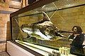 Preserved swordfish (39946983591).jpg