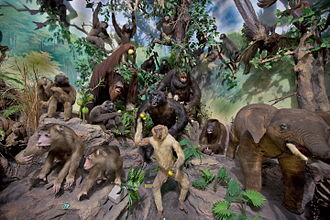 Taxidermy - Primate and pachyderm taxidermy at the Rahmat International Wildlife Museum & Gallery, Medan, Sumatra, Indonesia