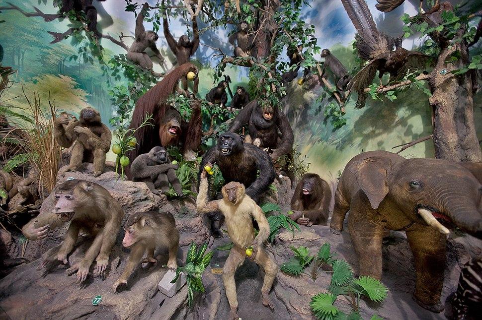 Primate Taxidermy, Rahmat International Wildlife Museum and Gallery
