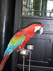 Papegaai in huis