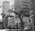 Purim Monring, Rothschild Boulevard P1130294.JPG